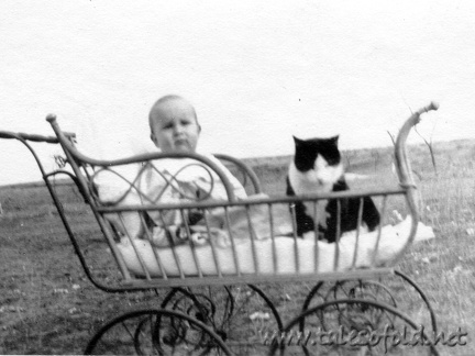 A Baby and Kitty in a Buggy